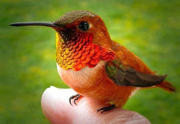 أصغر الحيوانات في العالم smallest-animals_2186_6_1527805925.jpg