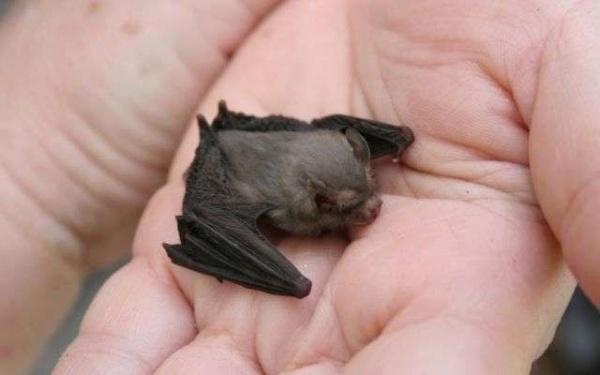أصغر الحيوانات في العالم smallest-animals_2186_7_1527805926.jpg